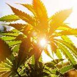 marijuana business attorney oklahoma